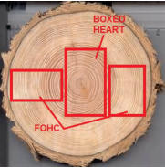 boxed heart and free of heart timbers