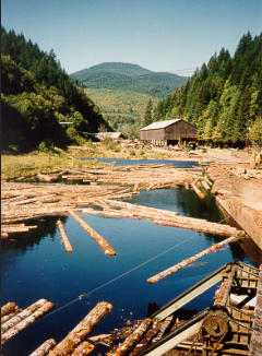 Old Douglas Fir Mill Pond - Monroe, OR